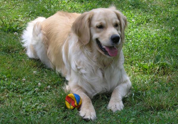 Najlepszy Przyjaciel Człowieka Pies Najpopularniejsze Rasy Psów